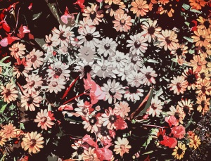 Fall FloralMuted2