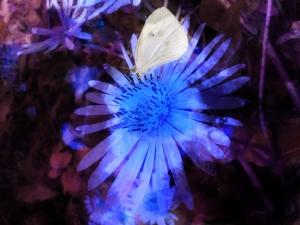 Flower & Moth1