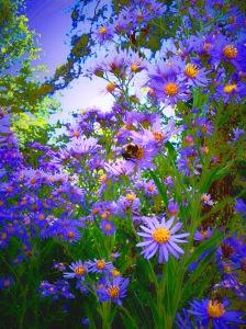 Spring Bee Lavender flowers