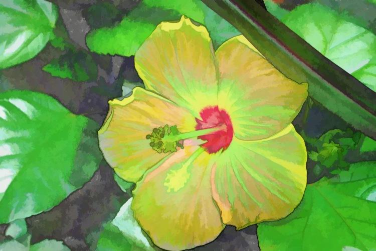 Yellow Hibiscus_3