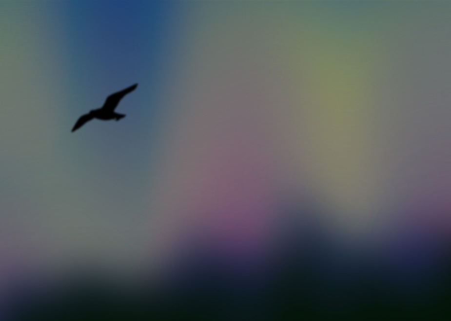 Bird at dusk