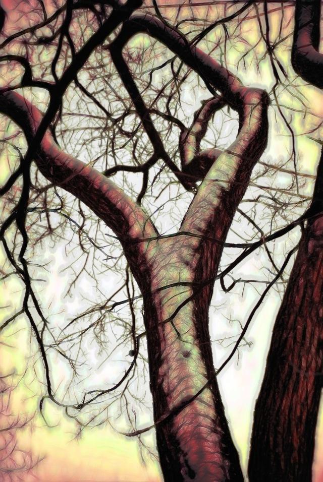 Graphic Tree Ault Park_20121227_2239