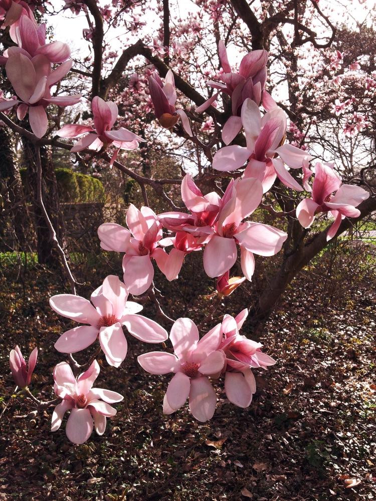Rosey Petals