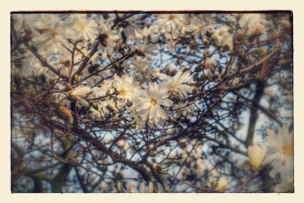Spring Flowers,jpg