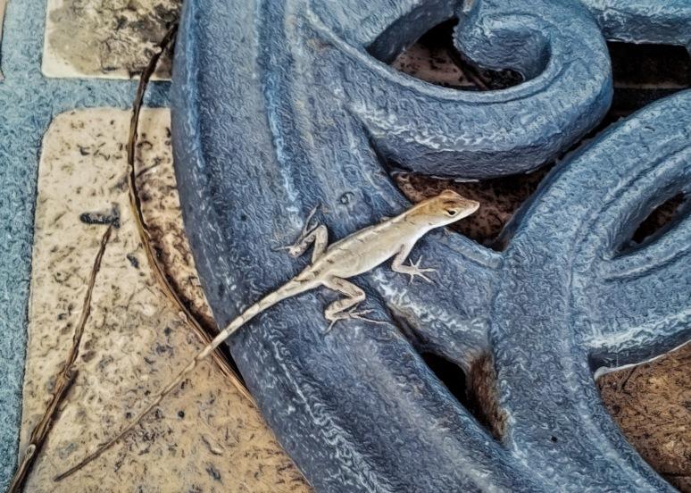 Beach Lizard2
