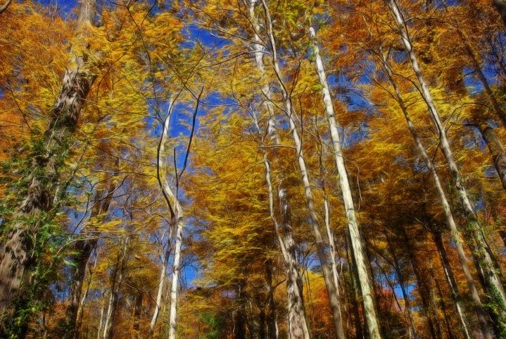 Caldwell Birches