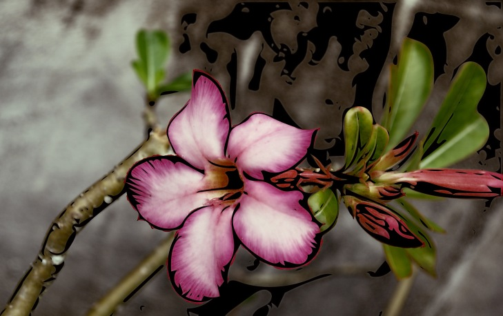 Plumeria1