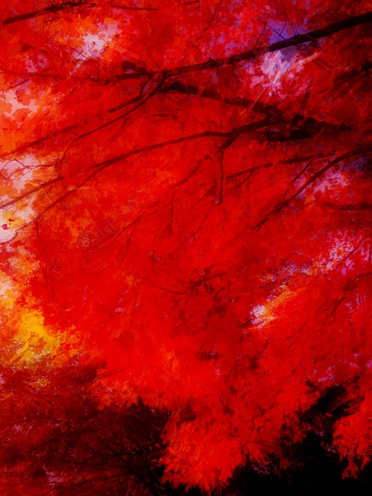 Fall Fire Trees