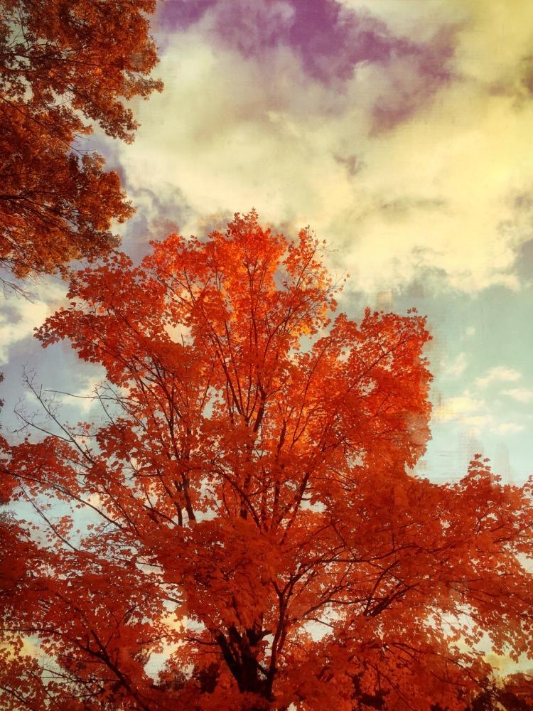 Fall Orange Burst