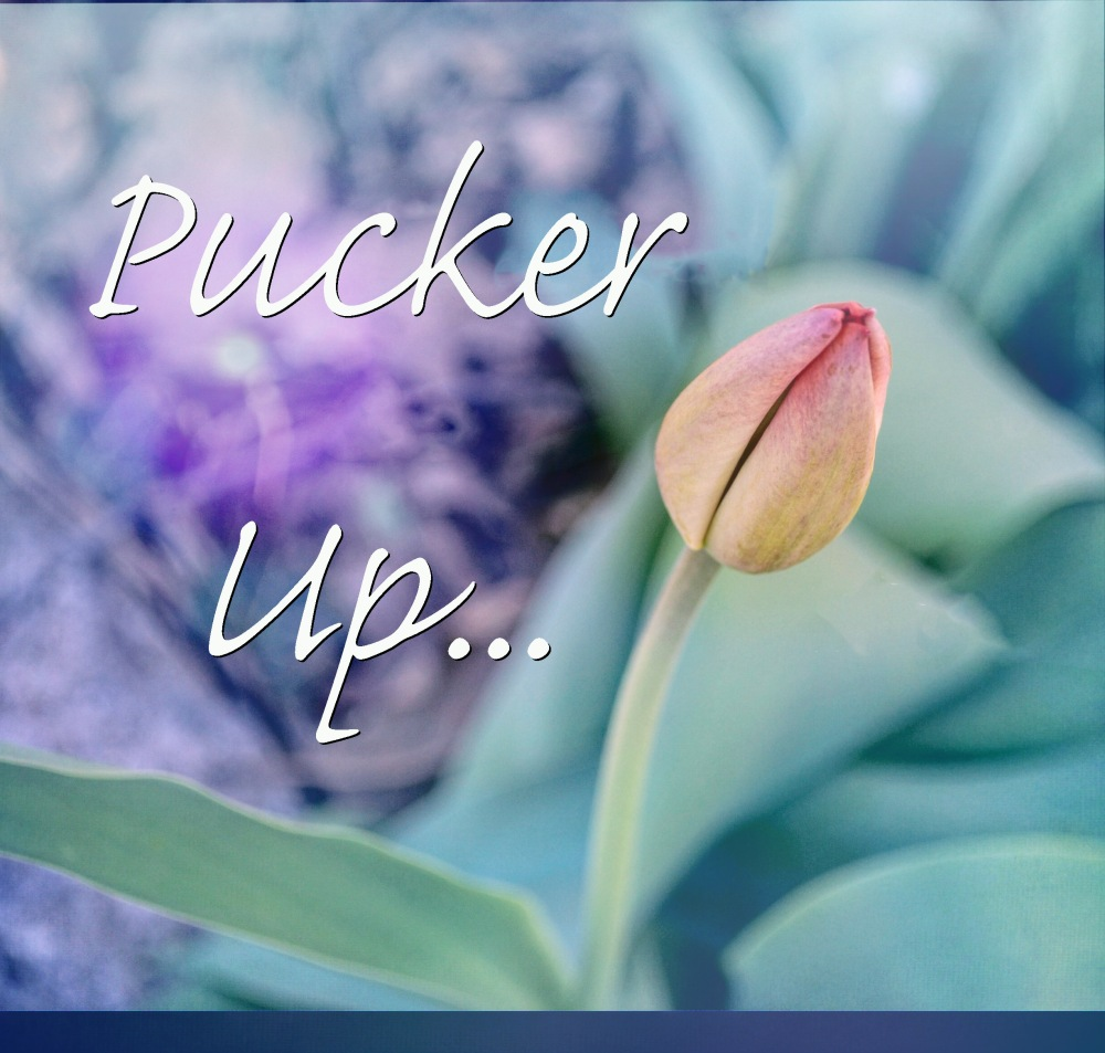 Tulip1Pucker Up