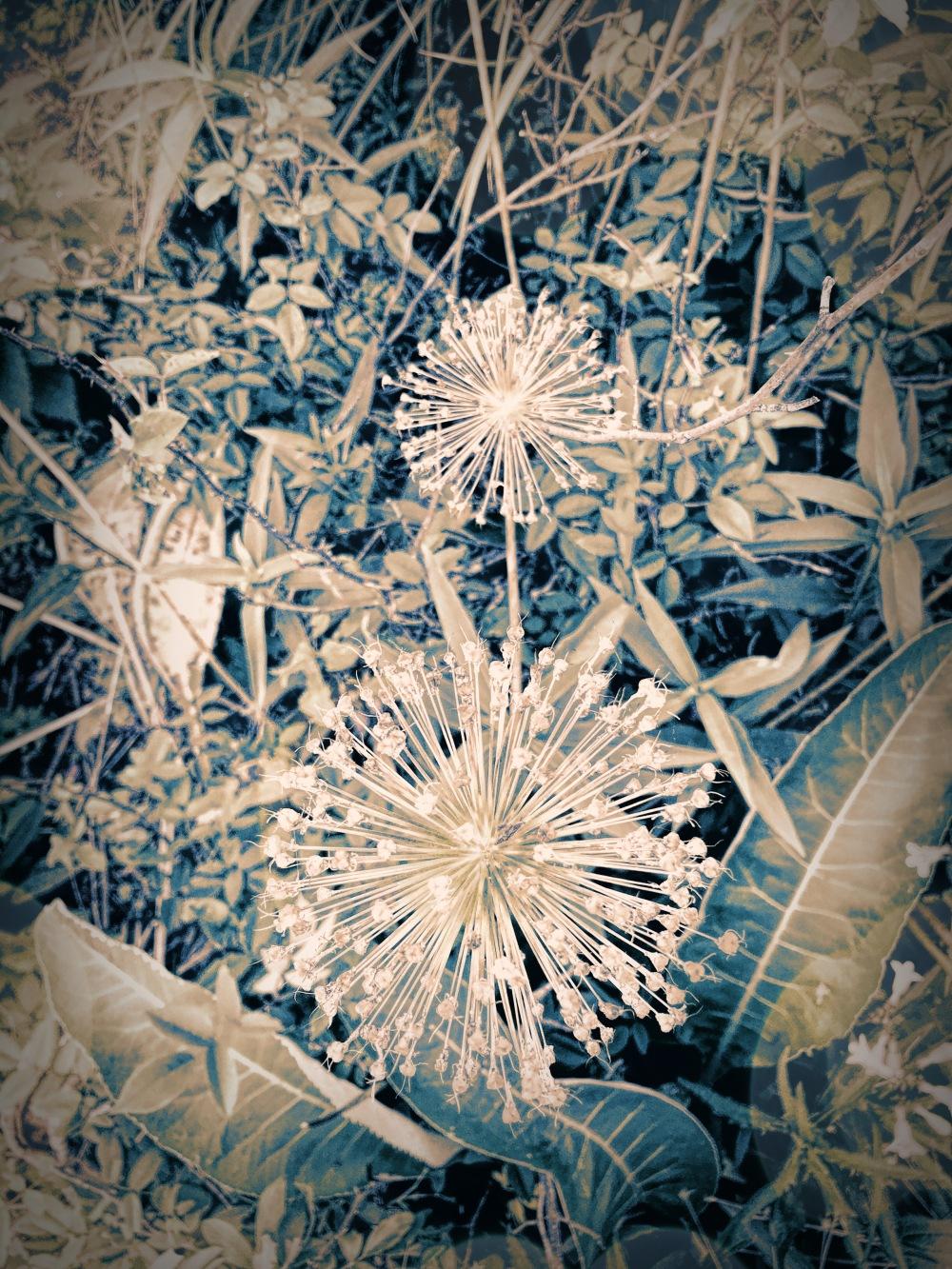 Fairy Blue Garden