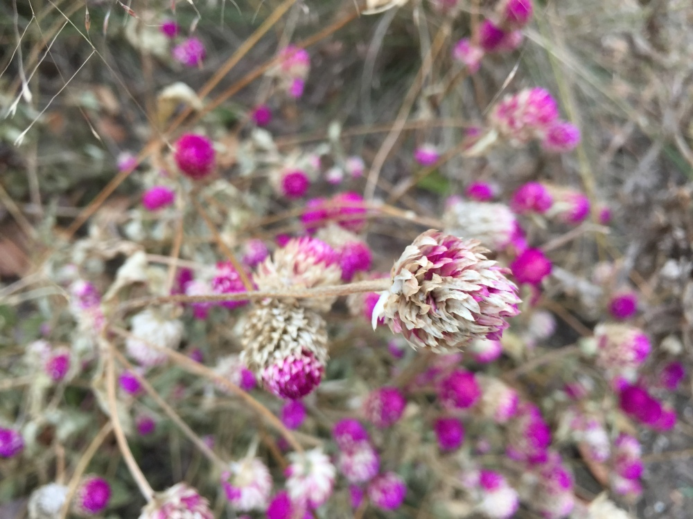 fall-pinks