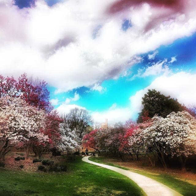 spring-skies