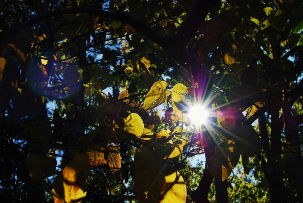 Leaves and Fall Light