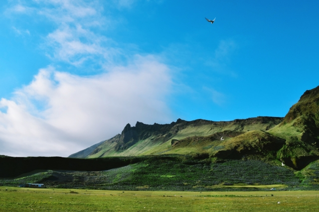 Iceland clifs